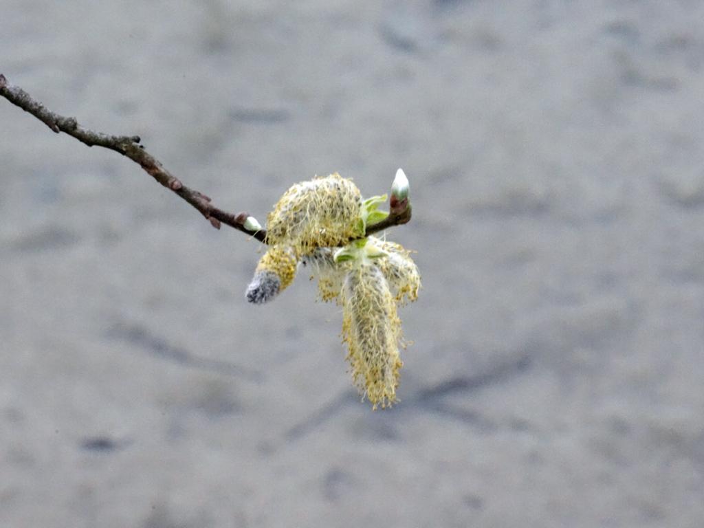 Wasser und Frühling