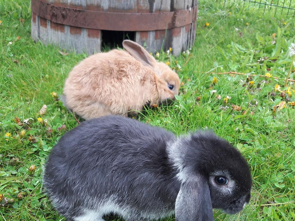 kaninchen 24notes